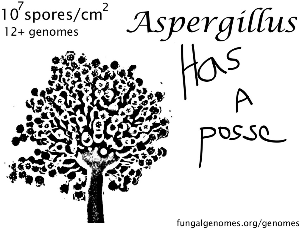 aspergillusposse
